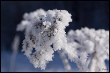 "Inspirat10n ""Winter dreams"""