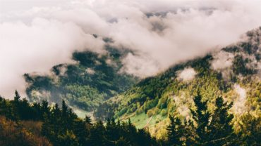 Herbstwaldimpressionen