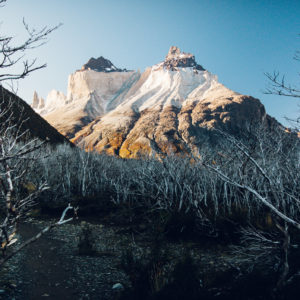 The burned part of the Torres del Paine Nationalpark. Hard contrast between Live and dead.