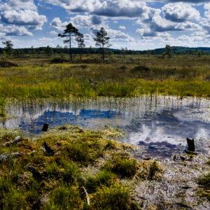 Finnisches Moor